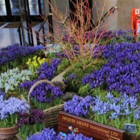 Dwarf Iris Collection