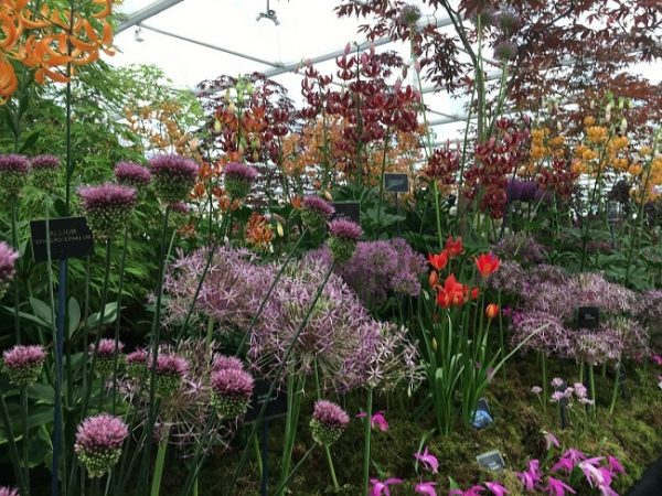 Bees and Butterflies Allium Collection
