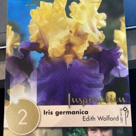 iris germanica edith wolford